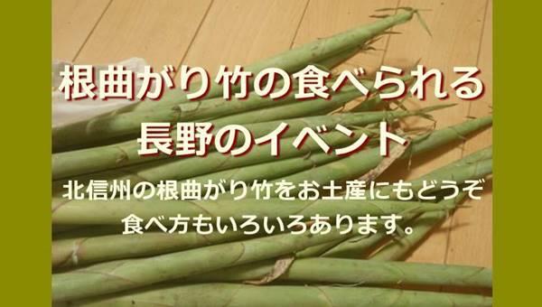 根曲がり竹の時期は長野へ!志賀高原や野沢温泉でサバ缶入り味噌汁が食べられるよ!
