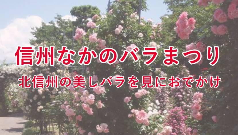 中野市バラ祭りの見どころ。ゲストの植樹したバラも探してみてね!