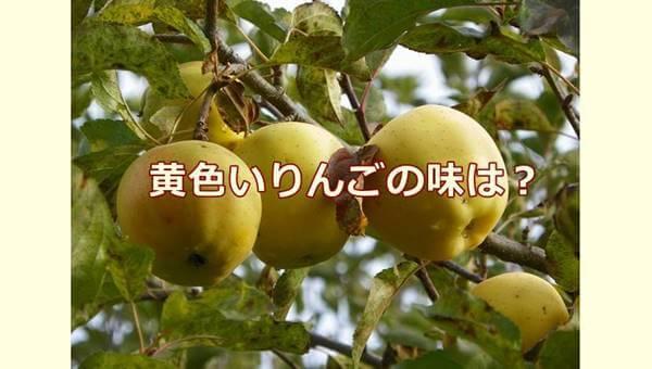 黄色いりんごの味は?