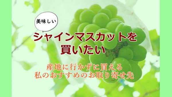 シャインマスカット通販でおすすめ産地は長野県!特に中野市産がおすすめ!
