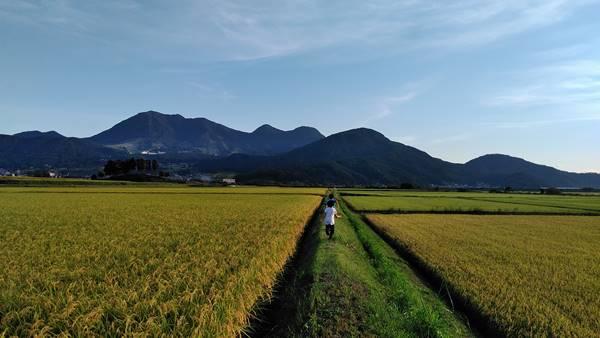 木島平村田園風景